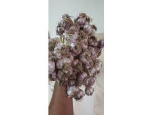 Original Hill Garlic