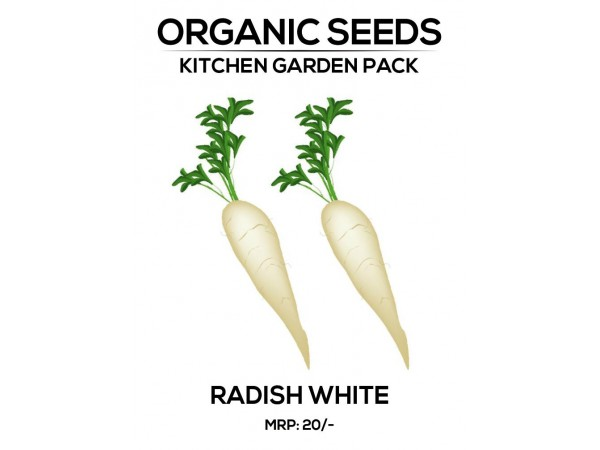 Radish White Seeds