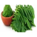 Moringa Leaves Raw Powder - 200 grams