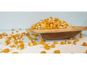 Pop Corn Seeds - 250grams